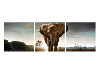 Tablou cu elefant (K012479K9030)