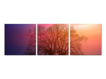 Obraz stromov v hmle (V020088V9030)