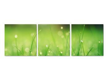 Obraz - rosa na tráve (V020169V9030)