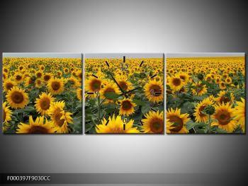 Obraz slunečnicového pole (F000397F9030CC)
