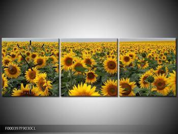 Obraz slunečnicového pole (F000397F9030CL)