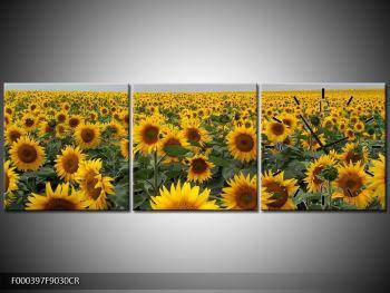 Obraz slunečnicového pole (F000397F9030CR)