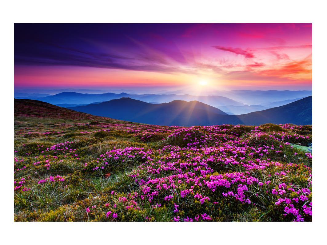 Slika planinskog rascvijetalog krajolika (K011322K9060)