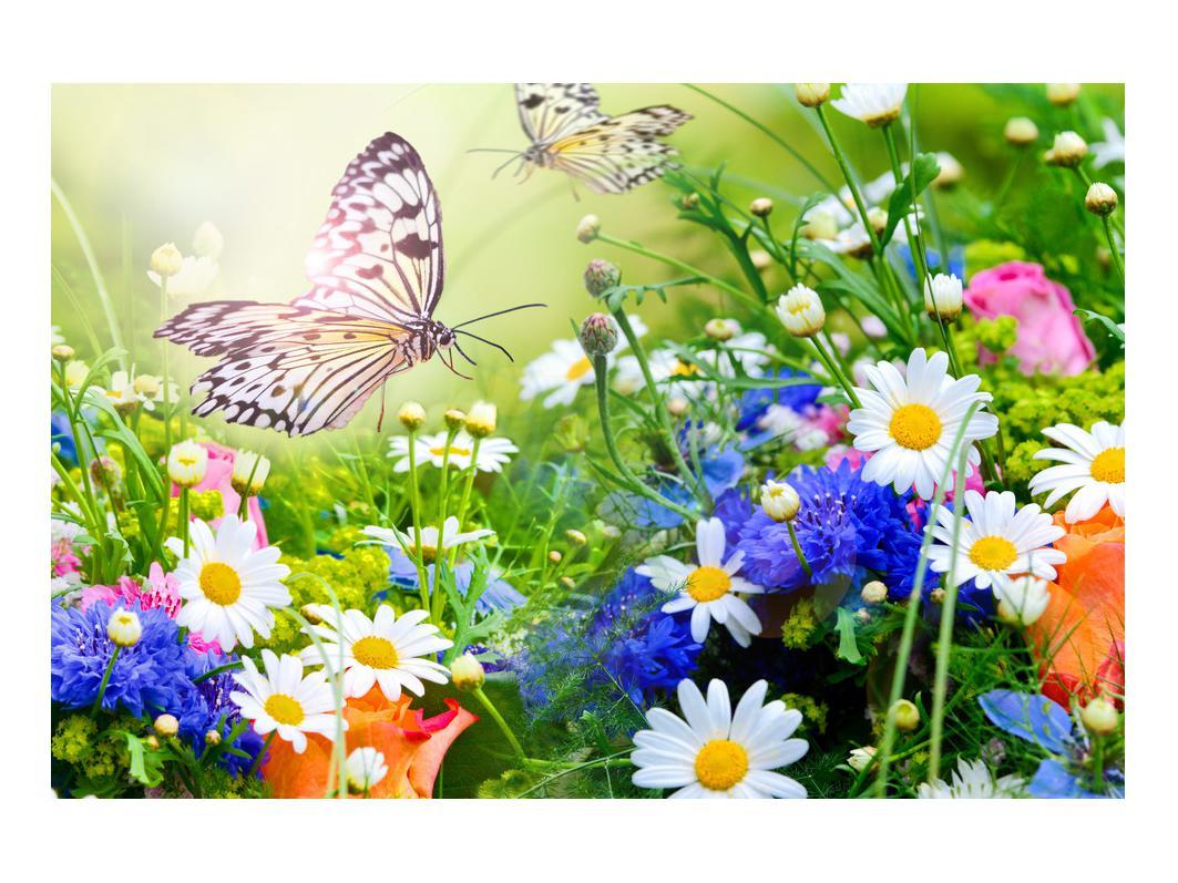 Slika poletnih cvetov z metuljem (K012220K9060)