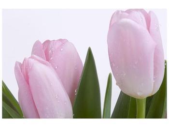 Obraz růžových tulipánů (F000389F9060)