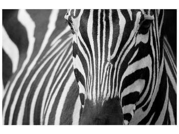 Obraz černobílého detailu zebry (F000715F9060)