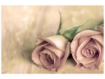 Obraz jemných růží (F001212F9060)