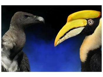 Obraz ptačích zobáku (F001358F9060)