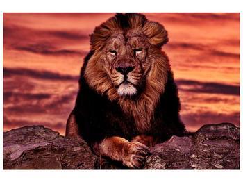 Obraz krále zvířat (F001507F9060)
