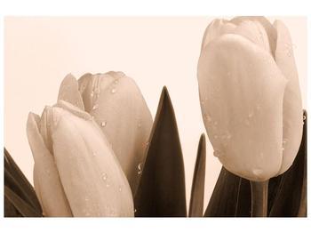 Krásný obraz tulipánů (F001883F9060)