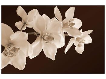 Krásný obraz bílých květin (F001888F9060)