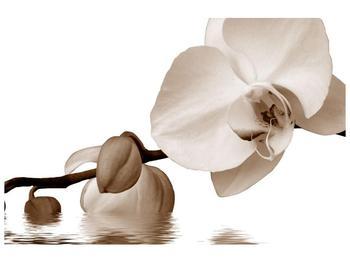 Krásný obraz bílé orchideje (F001900F9060)
