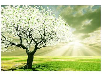 Obraz stromu na jaře (F002291F9060)
