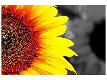 Obraz květu slunečnice (F002400F9060)