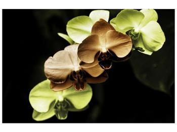 Obraz hnědých a zelených orchideí  (F002723F9060)