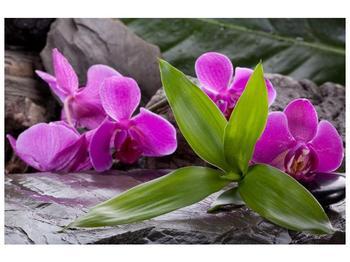 Obraz fialových orchidejí s listím (F004027F9060)