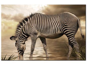 Obraz zebry (K011110K9060)
