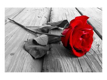 Obraz rudé růže (K011138K9060)