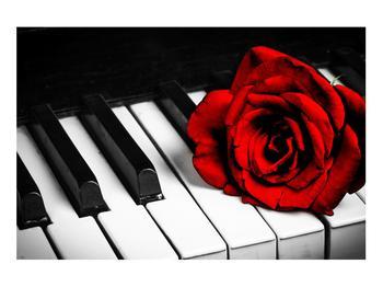 Zongora és egy rózsa képe (K011229K9060)
