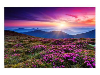Obraz horské rozkvetlé krajiny (K011322K9060)
