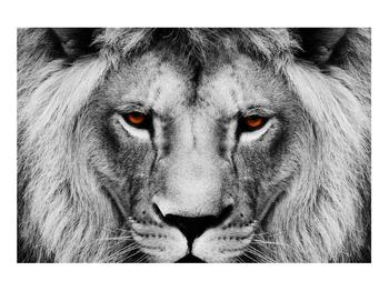 Černobílý obraz lva (K011390K9060)