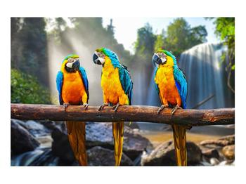 Obraz papoušků (K011994K9060)