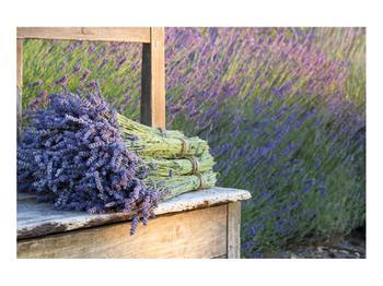 Obraz levandulových svazků (K012032K9060)