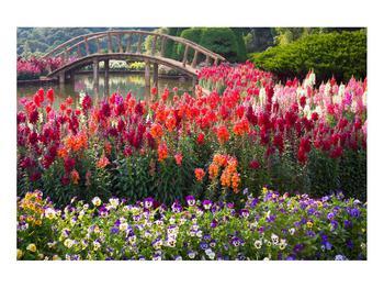 Obraz kvetín (K012048K9060)