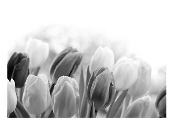 Černobílý obraz pučících tulipánů (K012127K9060)