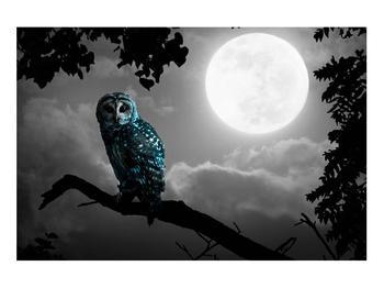 Tablou cu bufnița nocturnă (K012185K9060)