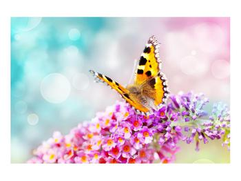 Obraz motýla na květech (K012351K9060)