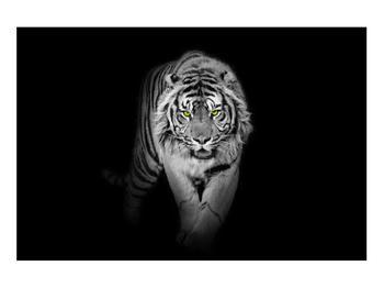 Tablou albnegru cu tigru (K012359K9060)