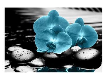 Tablou cu flori de orhidee albastre (K012398K9060)