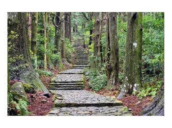 Obraz kamenných schodů v lese (K014268K9060)