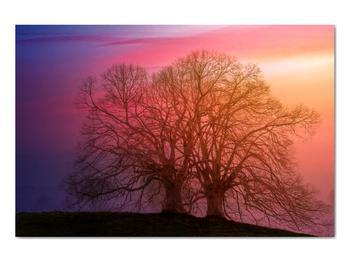 Obraz stromov v hmle (V020088V9060)