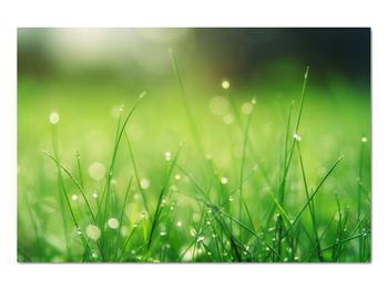 Obraz - rosa na tráve (V020169V9060)