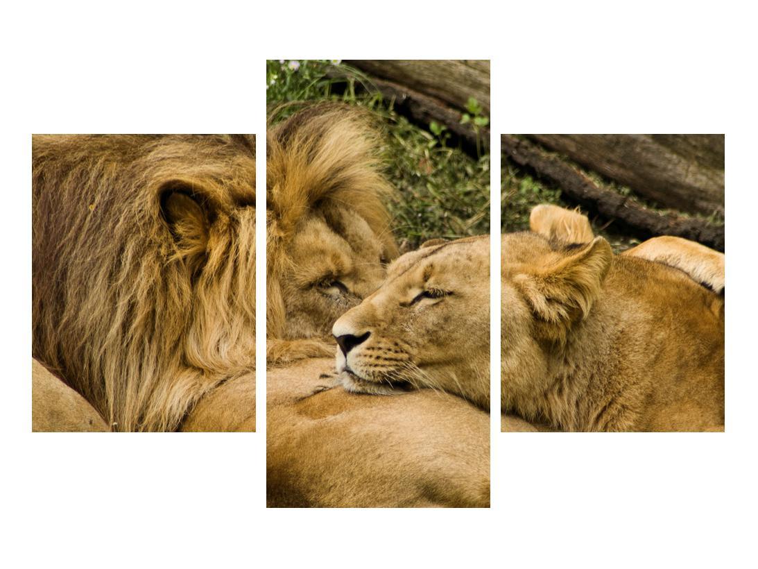 Moderna slika K010140K90603PCS (K010140K90603PCS)