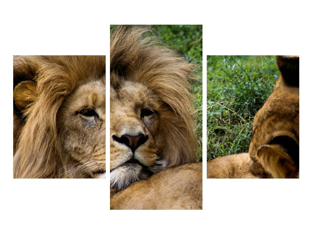 Moderna slika K010143K90603PCS (K010143K90603PCS)