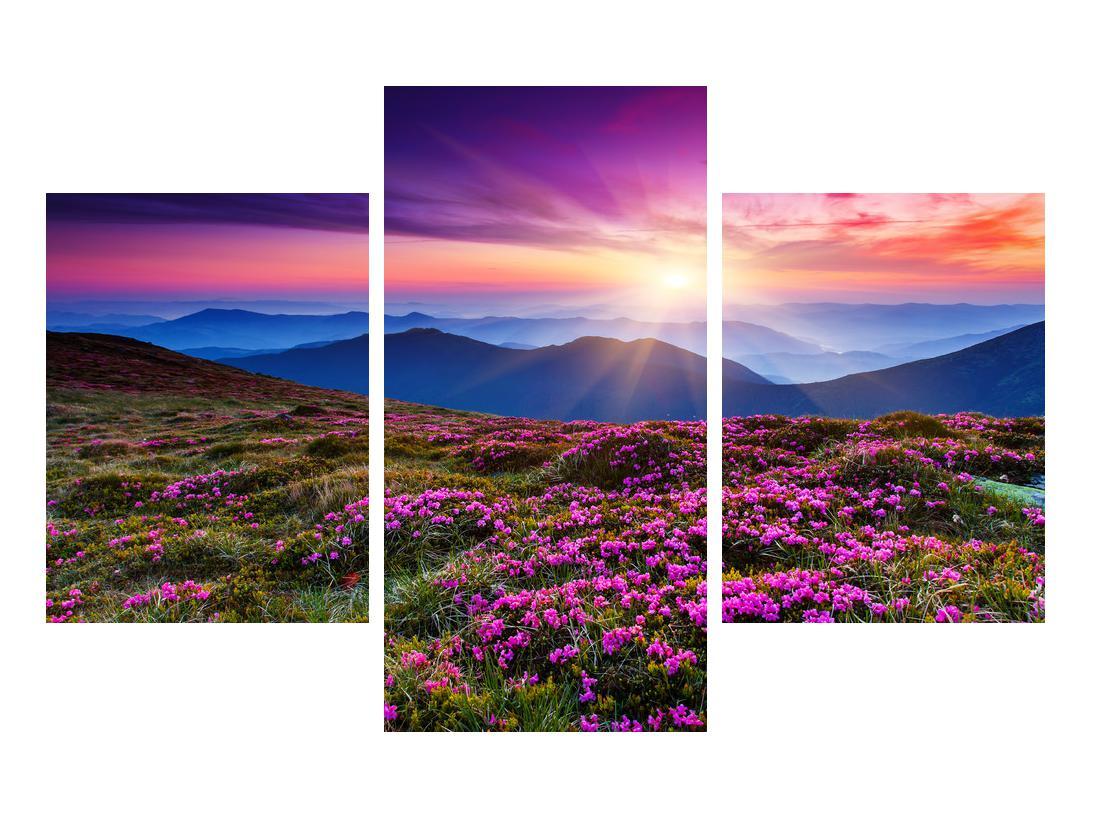 Slika planinskog rascvijetalog krajolika (K011322K90603PCS)
