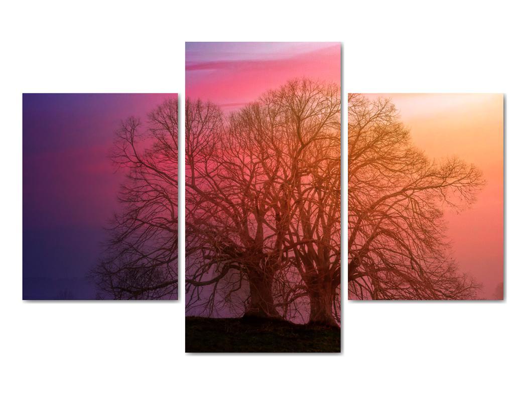 Obraz stromov v hmle (V020088V90603PCS)
