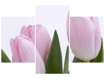 Obraz růžových tulipánů (F000389F90603PCS)