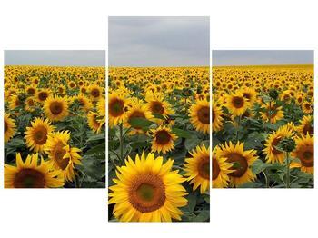 Obraz slunečnicového pole (F000397F90603PCS)