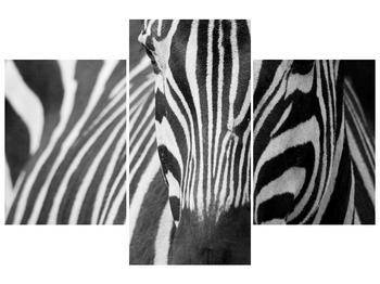 Obraz černobílého detailu zebry (F000715F90603PCS)