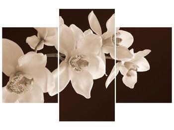 Krásný obraz bílých květin (F001888F90603PCS)