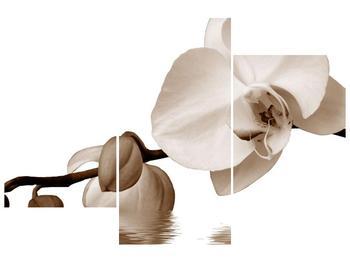 Krásný obraz bílé orchideje (F001900F90603PCS)