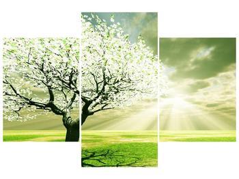Obraz stromu na jaře (F002291F90603PCS)