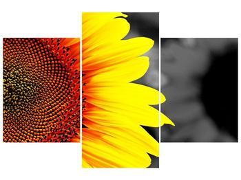 Obraz květu slunečnice (F002400F90603PCS)