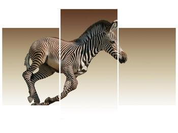 Obraz běžící zebry (F002416F90603PCS)