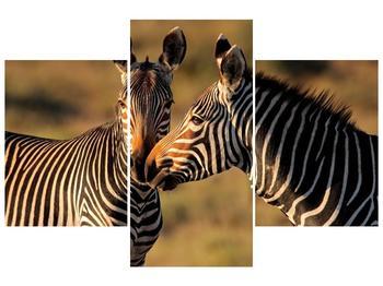 Obraz dvou zeber  (F002641F90603PCS)