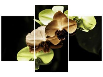 Obraz hnědých a zelených orchideí  (F002723F90603PCS)